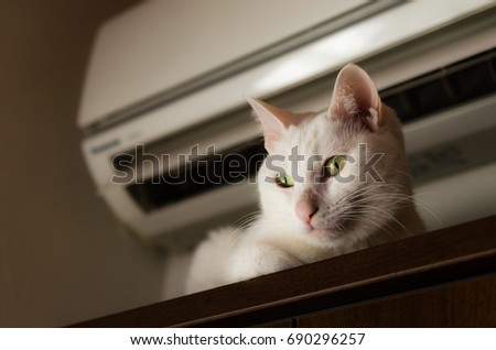 white cat under the air conditioner