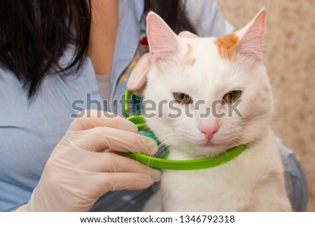 White cat wearing a green collar from fleas and ticks, for the prevention #1346792318