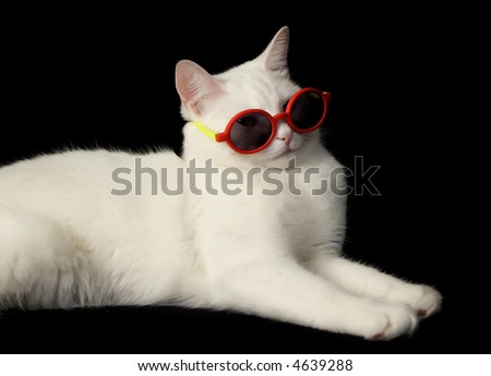 white cat wearing red sunglasses