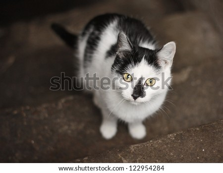 White cat with black patches