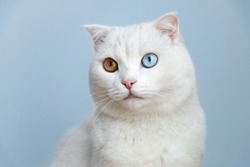 white cat with colorful eyes