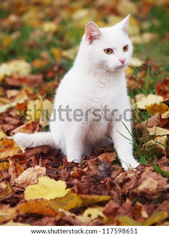 white cat with colorful leafs