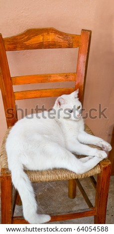 White cat with different colored eyes (blue and yellow) lies on a chair.