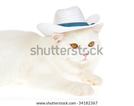 White cat with white cowboy hat, on white background