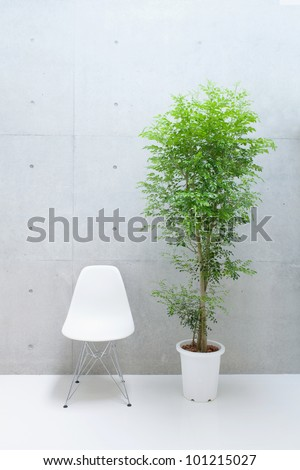 white chair and tree against concrete wall