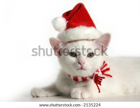 white Christmas kitten