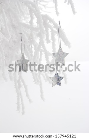 white christmas stars decoration hanging on frosty branches