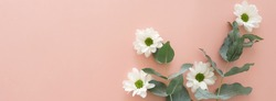white chrysanthemum flowers and eucalyptus leaves frame banner top view on pink background. copy space,  floral card, poster.