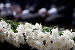 White chrysanthemum for Korean War on Memorial day event
