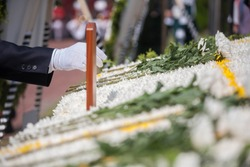 White chrysanthemum for Korean War on Memorial day event. Put down flower.