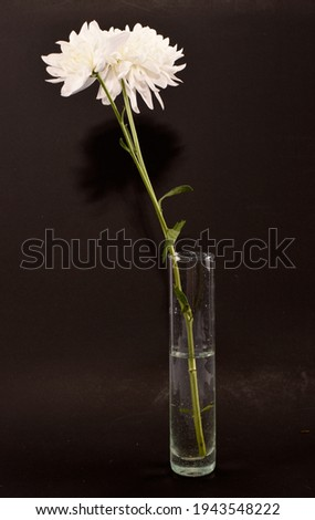 white chrysanthemums in a glass vase Foto stock ©