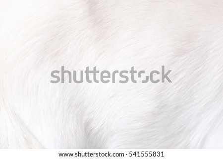 White Clean Soft Fluffy Animal Fur #541555831