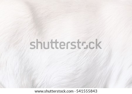 White Clean Soft Fluffy Animal Fur #541555843