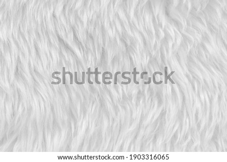 White clean wool with white top texture background. light natural sheep wool. white seamless cotton. texture of fluffy fur for designers. close-up fragment white wool carpet Сток-фото ©