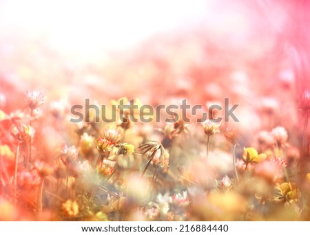 White clover and little yellow flowers in meadow - Shutterstock ID 216884440