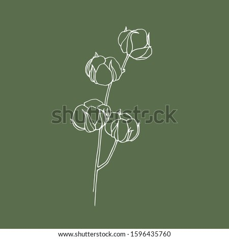 White Cotton on green background. Cotton drawing. White cotton. Wedding cotton.