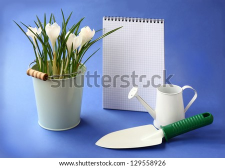 White crocuses, shover and watering-can on a background the clean sheet of paper for text