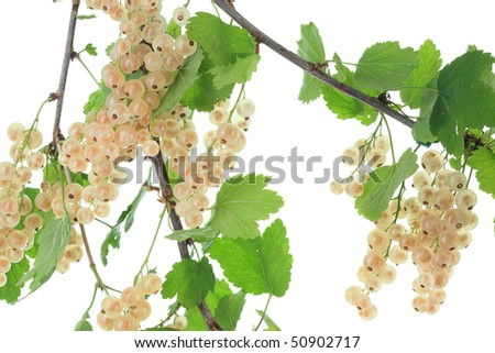 White currants on a white background. #50902717