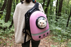 White cute cat looking outside from cat backpack with transparent window. Cat bag on the girls shoulders. Domestic cats outside and travelling with pets concept