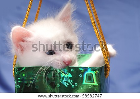 White cute kitten in a green shopping bag.