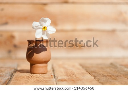 White daffodil in vase on old wooden table
