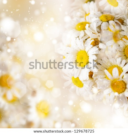 White daisies over defocused background for spring design