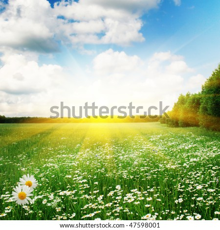 White daisies,trees and sun. - Shutterstock ID 47598001