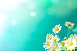 White daisy flowers against the blue sky