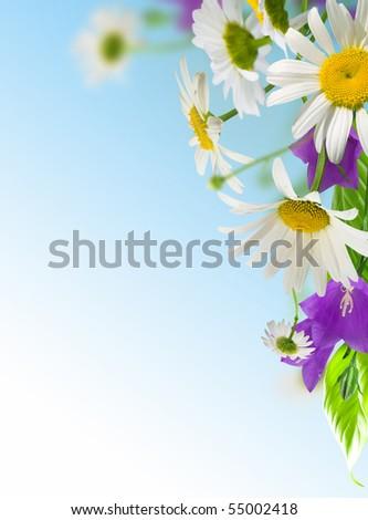 white daisywheels with blue campanula on blue background