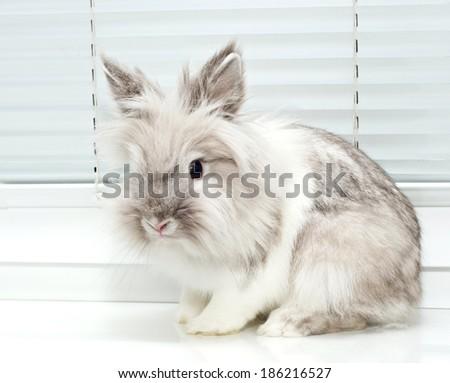 White decorative pet rabbit sitting on sill