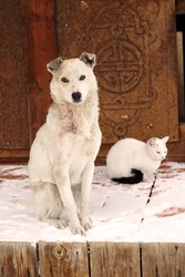 White Dog and Cat Sitting in Wooden Porch in Snow. Village Farm Domestic Animals with Dirty Muzzles