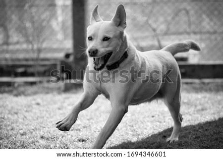 white dog on a walk on a sunny day Zdjęcia stock ©