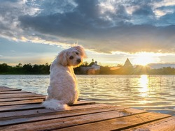 White dog on the banks of the Volkhov river meets the sunset. Staraya Ladoga. Leningrad oblast. Russia.