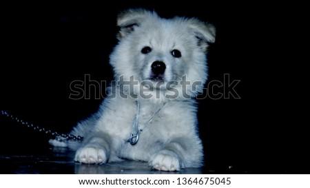 White doggie image #1364675045