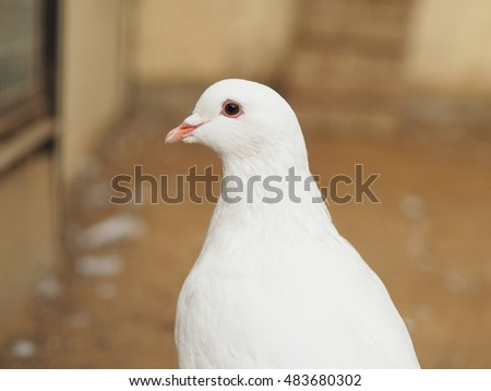 White dove #483680302