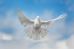 White dove flying against the blue sky with clouds