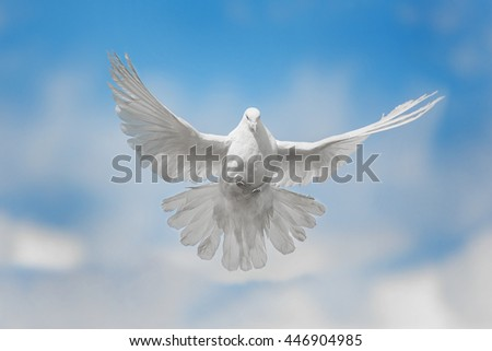 White dove flying against the blue sky with clouds #446904985