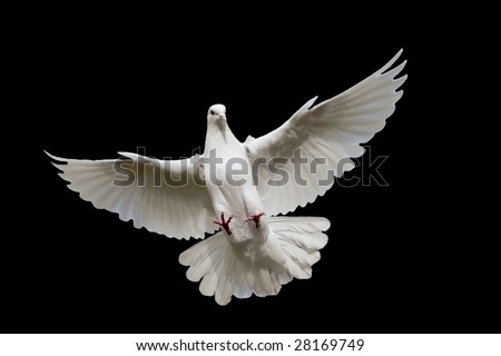 White dove flying in on the Sky.