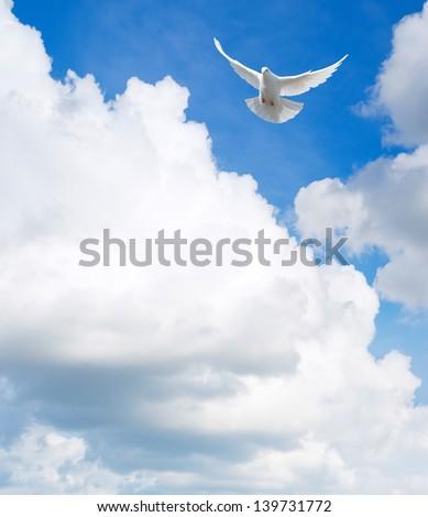 White dove flying in the sky - stock photo