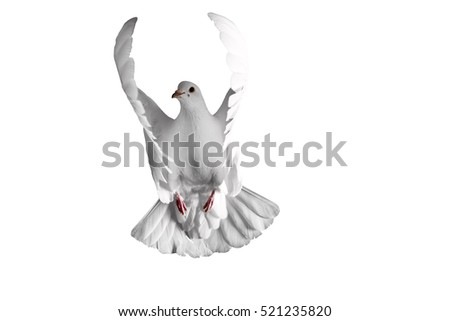 white dove flying on a white background #521235820