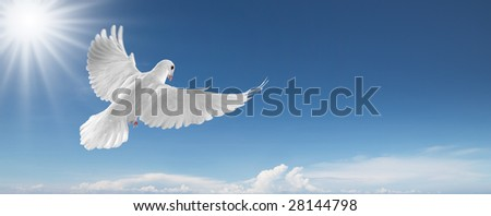 white dove flying on clear blue sky - stock photo