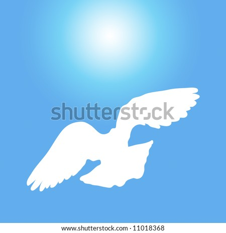 white dove flying on sunny blue sky