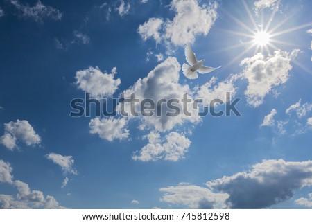 White dove flying to light #745812598