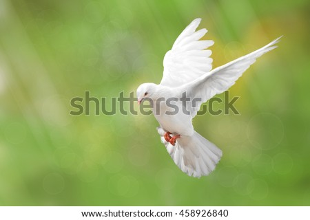 White Dove on green Bokeh and Freedom Concept and international day of peace 2017 #458926840