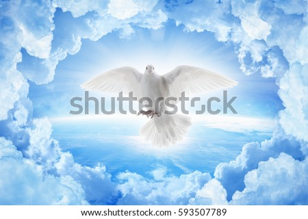 White dove symbol of love and peace flies above planet Earth. Elements of this image furnished by NASA.