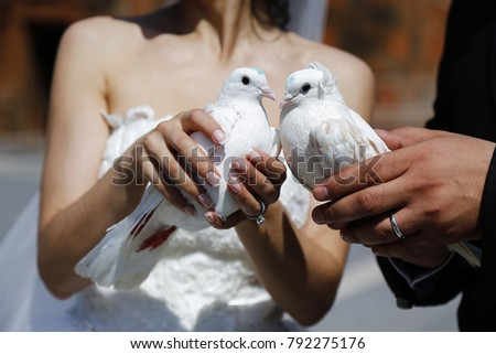 White doves White doves in the hands of the bride and groom Romantic wedding. Bride and groom holding white doves in hands #792275176