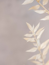 White dried flowers on grey background close up. Dry flower.