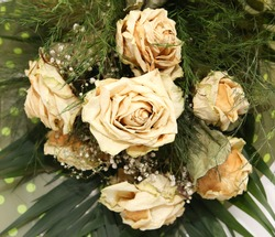 White Dry rose after valentine day, Faded rose