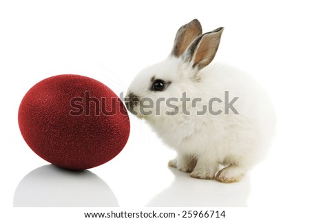 White Easter Bunny with red egg on white background with reflections