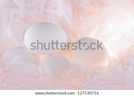 white eggs in the soft, gentle  pink feathers